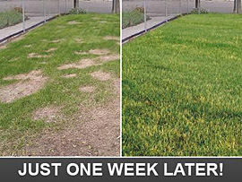 this is how your lawn will look just one week later after we've fixed/repaired the system